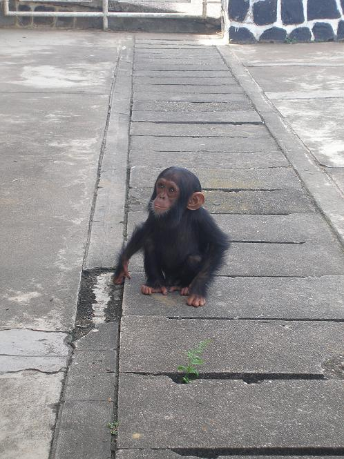 5ape-infant-for-sale-at-kindu-airport-2007.JPG