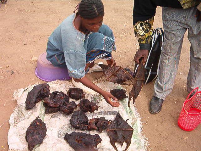 8bushmeat-bats-antilopesmoles-monkeys.jpg