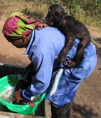 Angeline bathing Zamba with Doguy on her back