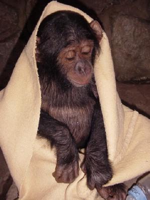 Chita loves blankets