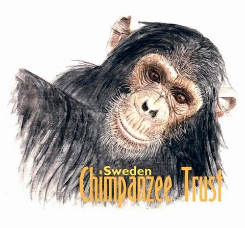 sweden-chimpanzee-trust-1.jpg