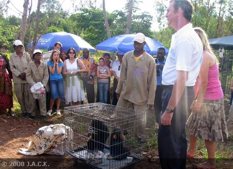 presentation-of-the-recently-seized-animals.jpg