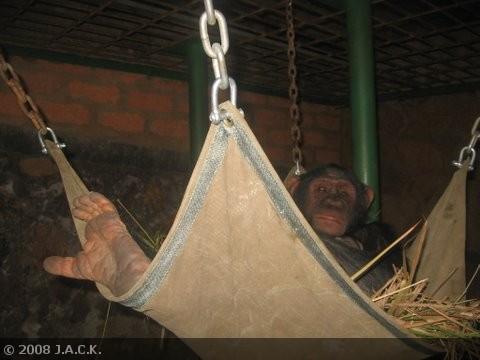 shasa-in-her-new-nest.jpg