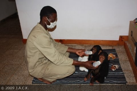 papa-augustin-feeding-the-babies.jpg