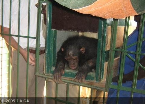 tika-entering-quarantine-cage.jpg