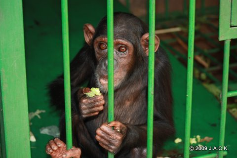 October 2009 - Elia is alone in quarantine area. She's doing fine and settling in amazingly