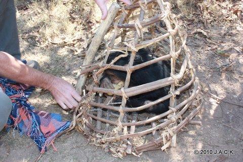 VIDA kept in small transport cage