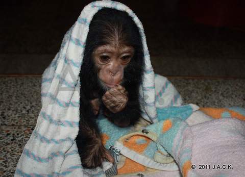 wrapped up in a wet towel, Luna was running a fever for several days...