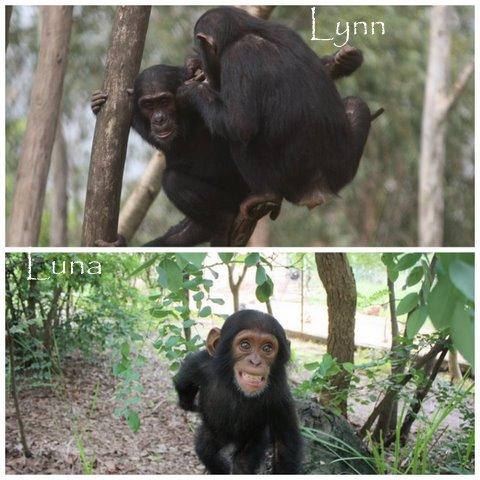 Lynn rescued in June and Luna in July 2011
