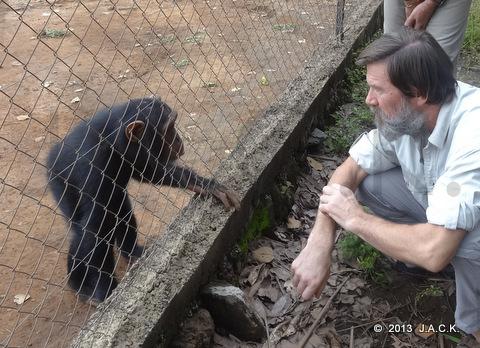Dr Ian meeting chimp Pasa