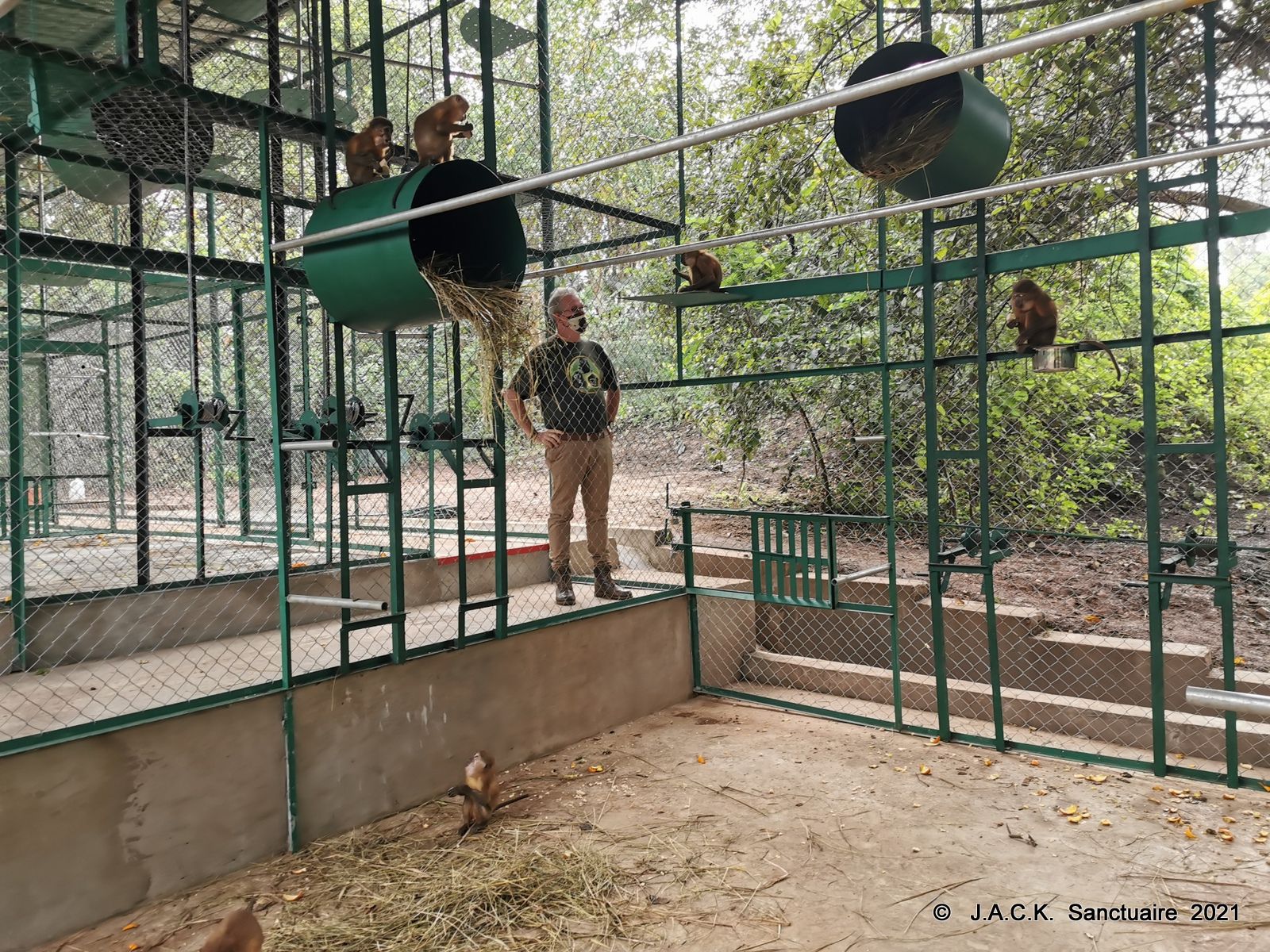 Arrival at J.A.C.K. of the monkeys repatriated from Zimbabwe