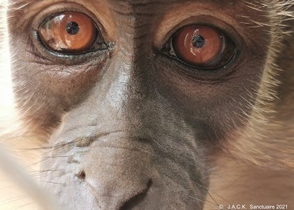 Updates on the monkeys repatriated from Zimbabwe