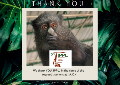 IPPL contributes to the well-being of the monkeys repatriated from Zimbabwe