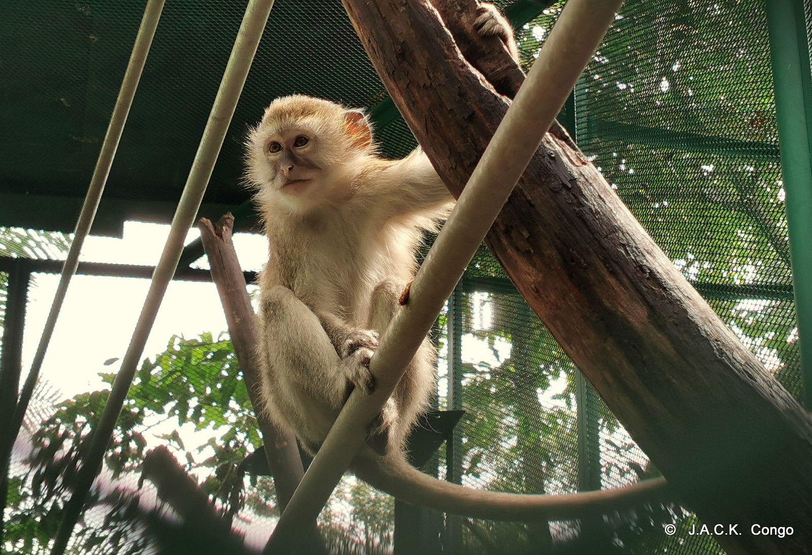 The rescued vervets are enjoyng their new life