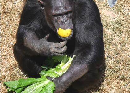 Wimbi likes fruits