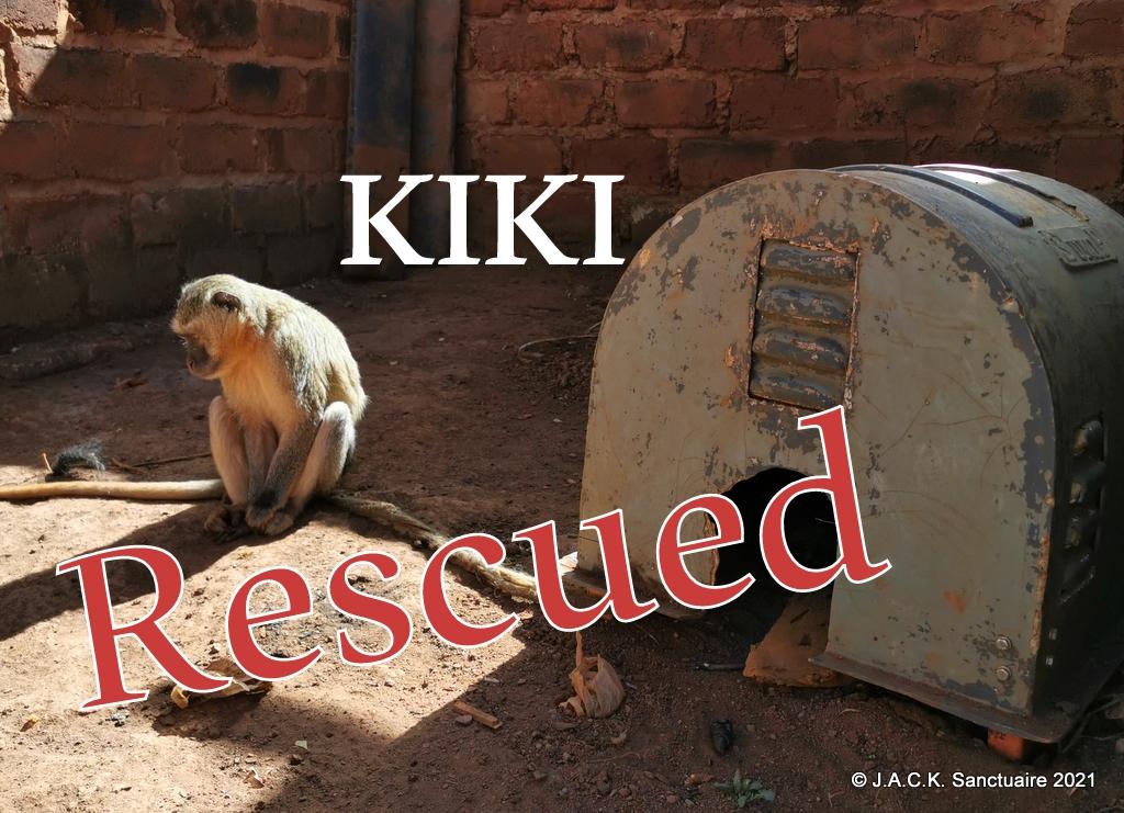 KIKI the Malbrouck monkey