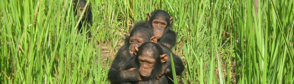 J.A.C.K Chimpanzee Sanctuary