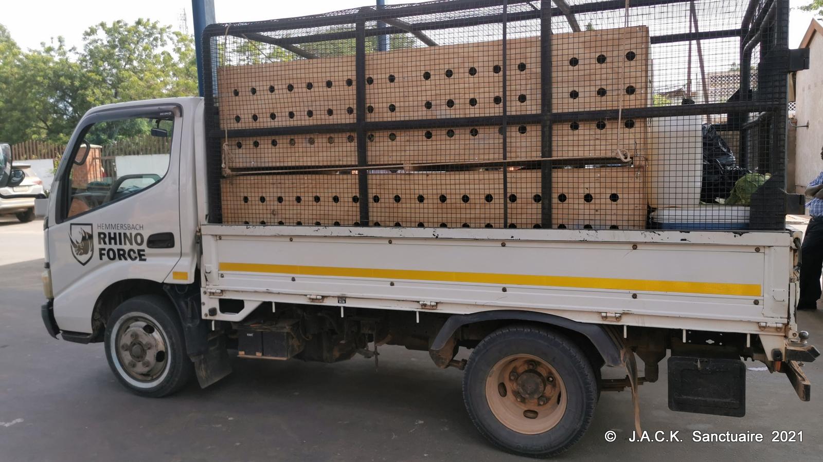 DRC monkeys seized in Zimbabwe – ongoing repatriation!