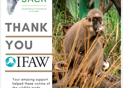 IFAW supports the first month of food and vet care of our 20 primate newcomers repatriated from Zimbabwe