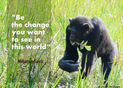 March 3rd – World Wildlife Day
