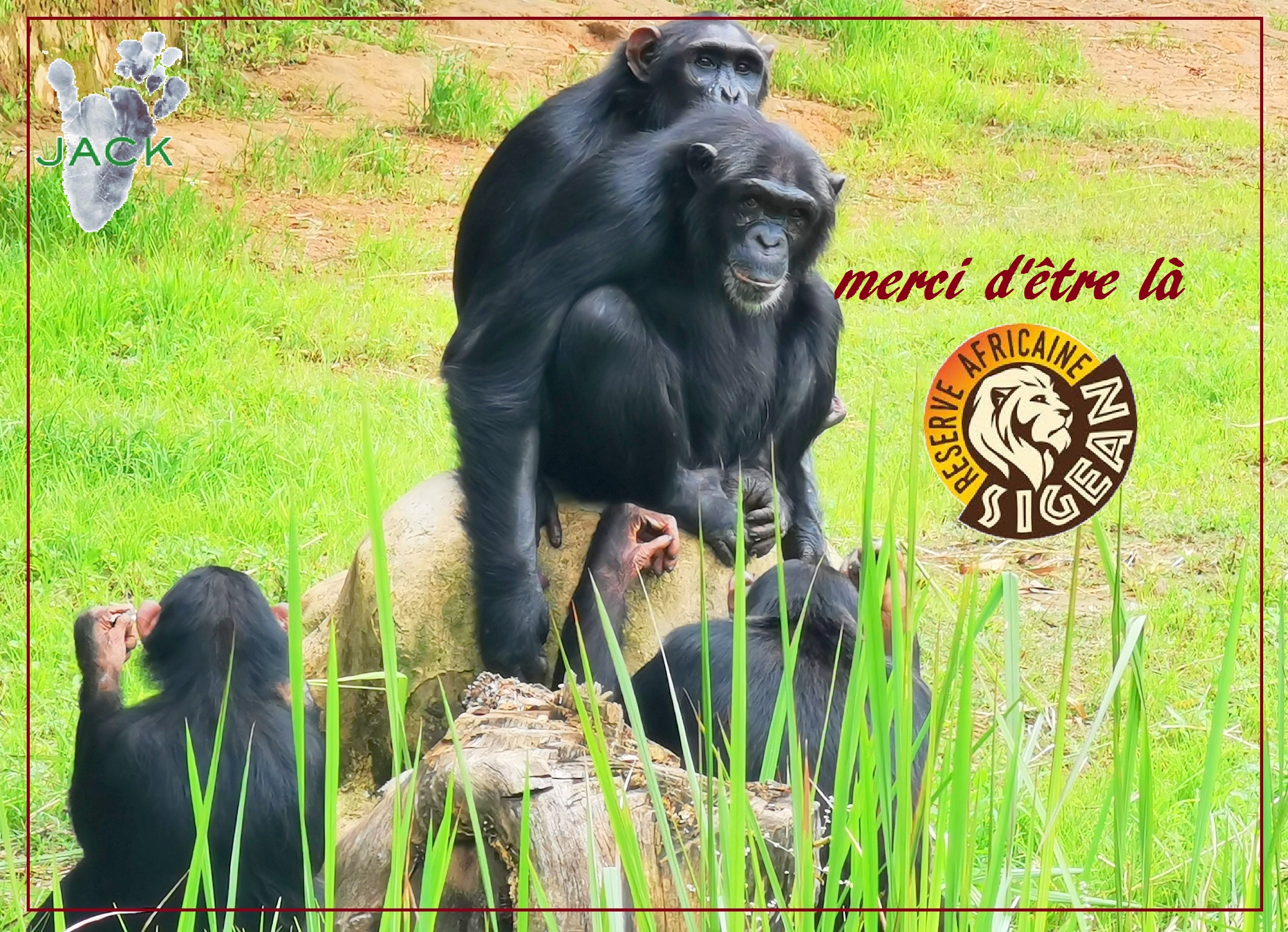 The French Reserve Africaine de Sigean supports chimp & monkey building projects