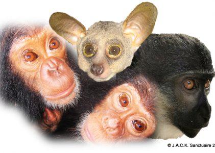International Primate Day